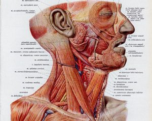 The Head, Shoulder and Neck in Context-Syracuse @ Crouse Hospital, Marley Education Center